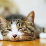 猫の冬毛はいつからいつまで?夏毛との違いや特徴、抜ける時の対処方法は?