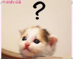 ミルクを飲まない猫