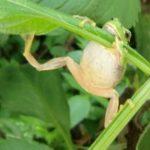 カエルの餌!頻度や量、虫以外のおすすめや食べない時の対処法も!