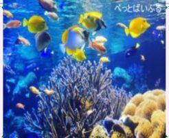 珊瑚水槽レイアウト