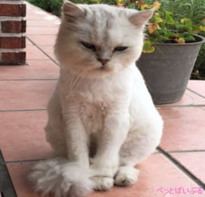 猫のサマーカット 完成