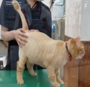 猫のサマーカット2