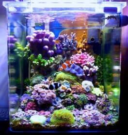 サンゴの水槽のレイアウト6