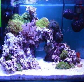 サンゴの水槽のレイアウト4