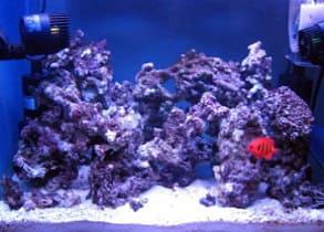 サンゴの水槽のレイアウト3