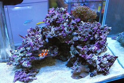 サンゴの水槽のレイアウト2