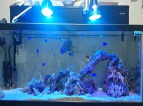 サンゴの水槽のレイアウト1