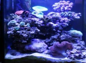 サンゴの水槽のレイアウト8