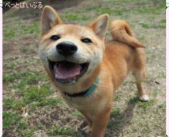 ペット110番 犬画像