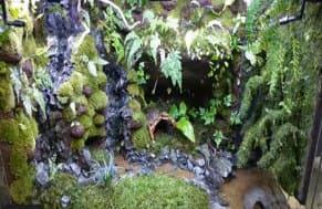 滝のある水槽レイアウト