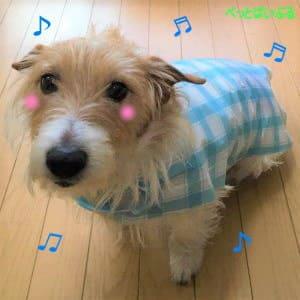 愛犬にレインコートを試着