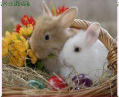 ウサギの特徴や生態