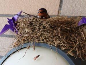 ツバメの巣3