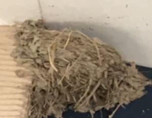 ツバメの巣 完成