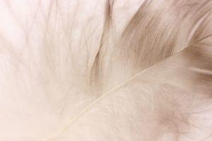綿羽の画像