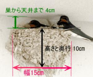ツバメの大きさ(サイズ)