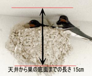 天井から巣の底面までのサイズ